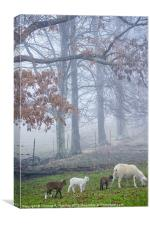 Winter Lambs Foggy Day, Canvas Print