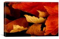 Autumn Curl 2, Canvas Print