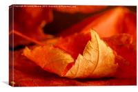 Autumn Curl 3, Canvas Print