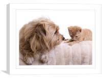 Dog & Kitten, Canvas Print
