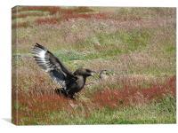 CaraCara Birds, Falklands, Canvas Print
