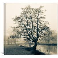 Bakewell tree, Canvas Print