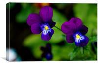 Purple Light of Love, Canvas Print