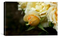 A rose by any other name would smell as sweet, Canvas Print