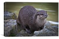 Otter on the Rocks, Canvas Print