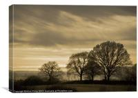 Winter Trees in Sussex, Canvas Print
