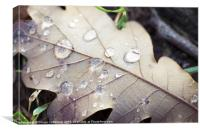 Light in the drops, Canvas Print