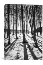 Trees in winter with shadows, Canvas Print