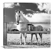 Mare and foal behind fence, Canvas Print