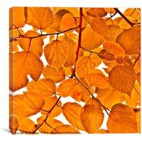 Orange leaves, Canvas Print