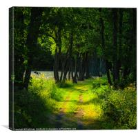 Old tree-lined path, Canvas Print