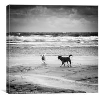 Dogs playing on the beach, Canvas Print