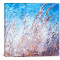 Reeds with hoar frost, Canvas Print
