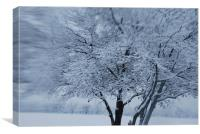 Snow Tree, Canvas Print