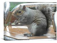 cheeky little squirrel, Canvas Print