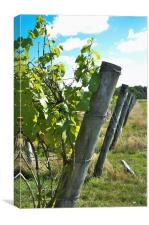 Fence posts, Canvas Print