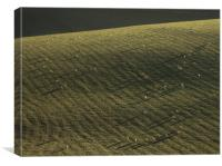 South Downs, Sussex, Sheep, Long Shadows, Canvas Print