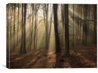 Friston Forest, Sussex, First Light, Sun, Canvas Print