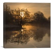Swan in the morning mist, Canvas Print