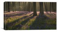 First Light in Wepham Woods, Canvas Print