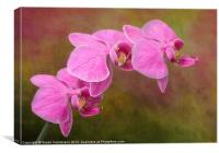 Orchid Cluster, Canvas Print