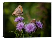 Meadow Brown, Canvas Print