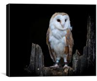 The Barn Owl, Canvas Print