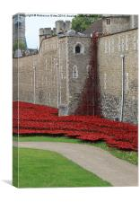 Poppies at Tower of London, Canvas Print