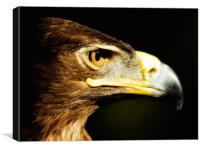 Eagle Eye - Steppes Eagle profile, Canvas Print