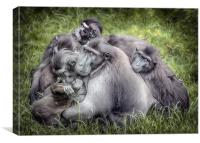 Monkeys - Sulawesi Crested Macaque, Canvas Print