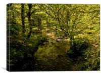 River Meavy, Dartmoor, Canvas Print