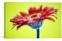 Red Flower On Yellow, Canvas Print