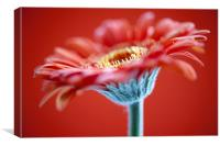 Red Flower On Red, Canvas Print