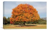 Colourful Tree with Fall colored foliage, Canvas Print