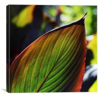 Colorful tropical leaf in the Fall, Canvas Print