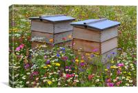 Wild Flower Meadow-Bee Hives, Canvas Print