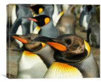 King Penguins 1, Canvas Print