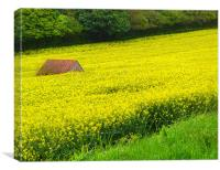 Hidden in the rapeseed!, Canvas Print