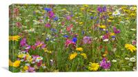 Colour in wildflower meadow1, Canvas Print
