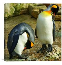 Arty pair of king penquins, Canvas Print