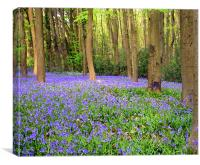 Arty bluebell wood 2, Canvas Print