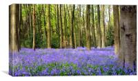 Bluebell wood in texture