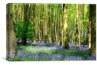 Woodland Bluebells 3, Canvas Print
