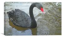Black Swan, Canvas Print