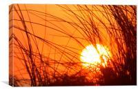 Sunset Through the Grass, Canvas Print