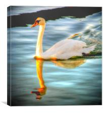 Swan Lake at Sunset, Canvas Print