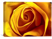 Opening Rose Bud, Canvas Print
