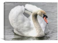Swan on the Marine Lake, Canvas Print