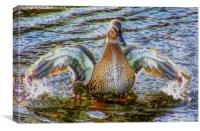 Lady Duck, Canvas Print