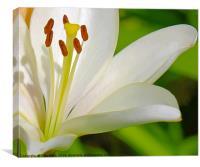 White Lily (Digital Art), Canvas Print